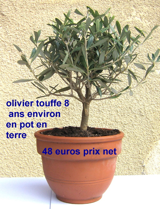beautiful prix olivier en pot #5: olivier artificiel new arbre